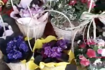 Cestinhos de Plantas e Flores por apenas 10€